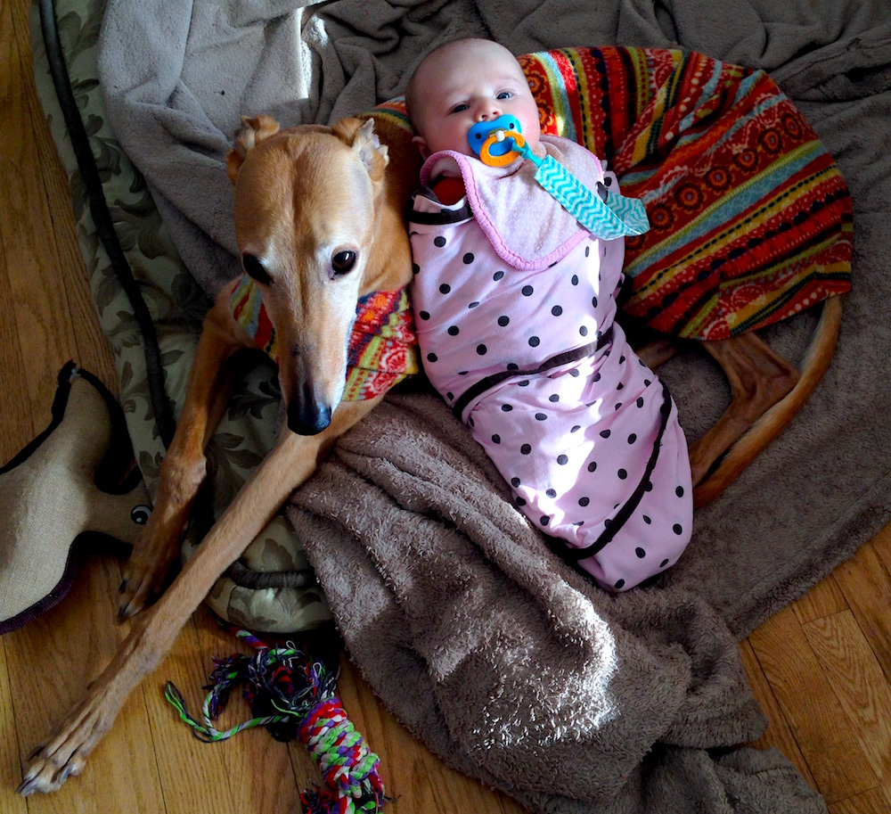 Babywoods hanging out in her Miracle Swaddle with Frugal Hound