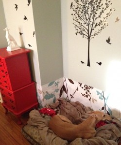 The completed dog corner!