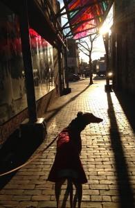Frugal Hound on a winter walk