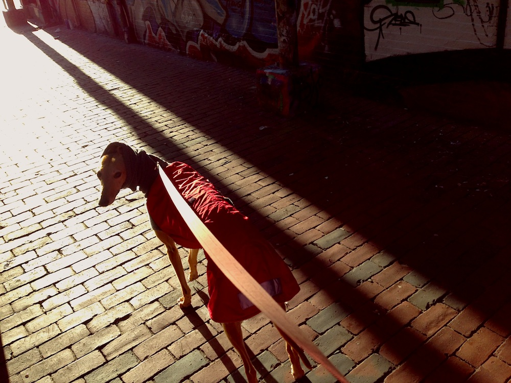 FrugalHound_AlleyWalk