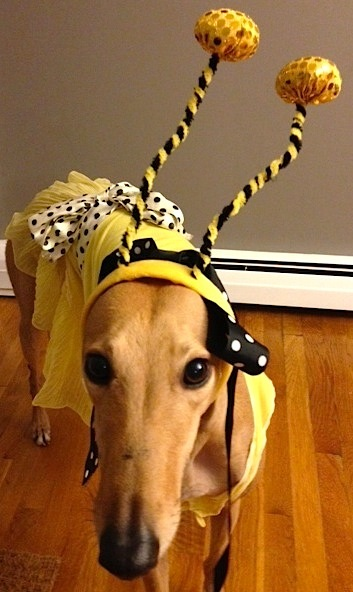 Frugal Hound Says: Bee Smart About Your Finances