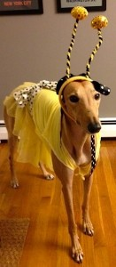 Frugal Hound: cute as a bee, but not qualified to buy a home.