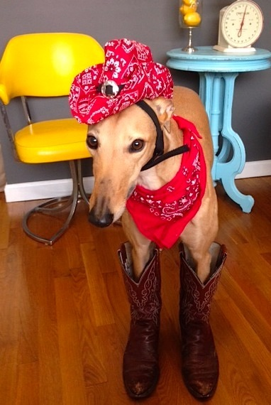 Frugal Hound Shows off her Thrift Store Boots