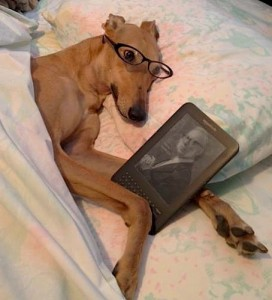 Sometimes Frugal Hound needs her reading glasses