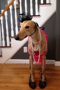 Frugal Hound is Fancy on a Budget