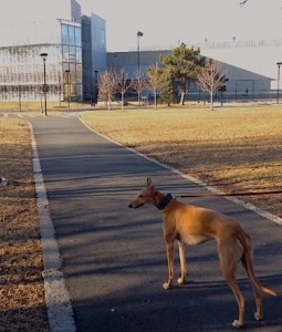 Frugal Hound goes to the public library (well, not inside...)