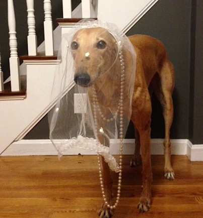 Too bad we didn't have Frugal Hound when we got married... she makes a good flower girl!
