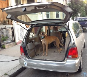 Frugal Hound shows off our sweet 19-yr-old ride