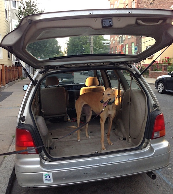 Frugal Hound demonstrating Frugalwoods-mobile's cargo space