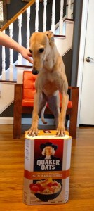 Frugal Hound the circus horse
