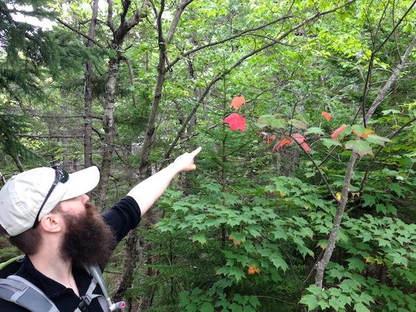 Hark! The first turned leaf on a hike.