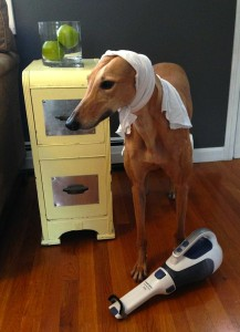 Frugal Hound: not actually helpful with household chores