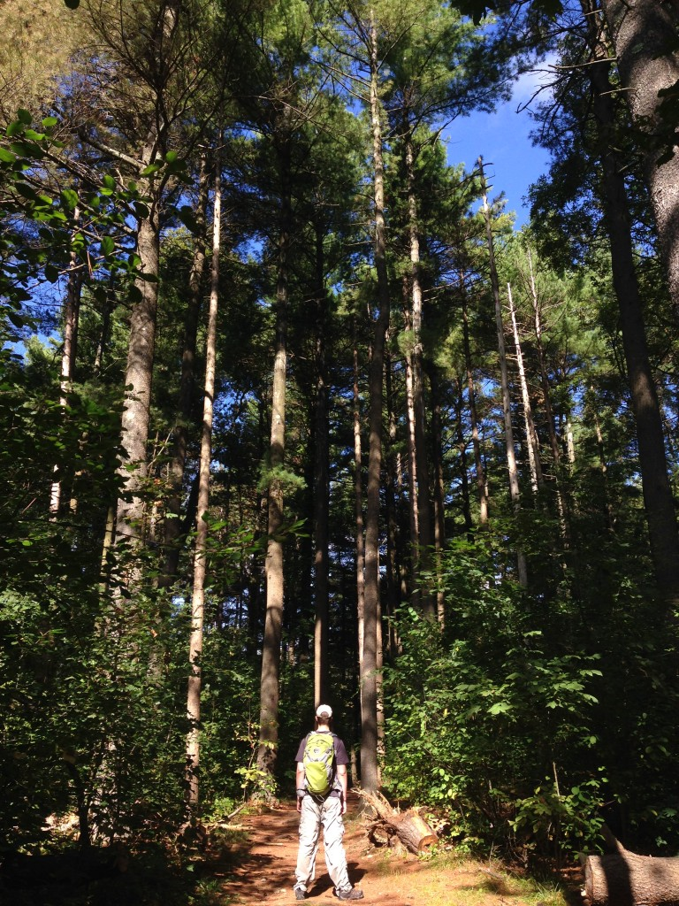 Mr. FW in the pine forest at The Fells