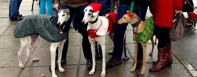 Frugal Hound (on right) with some fellow greyhound buddies