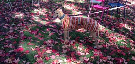 Frugal Hound enjoys the fall!