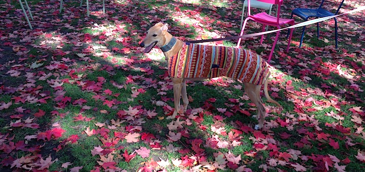 Frugal Hound enjoys the fall!