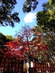 Enjoy this photo of a fall tree I took