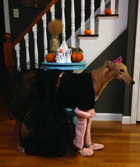 Ballet Hound