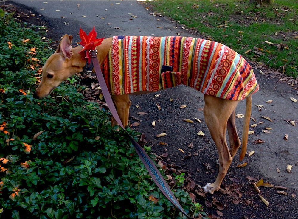 Fall Frugal Hound is fine without heat