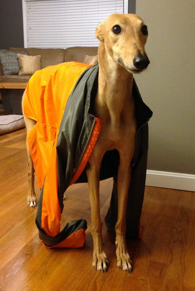 Frugal Hound models Mr. FW's cycling jacket