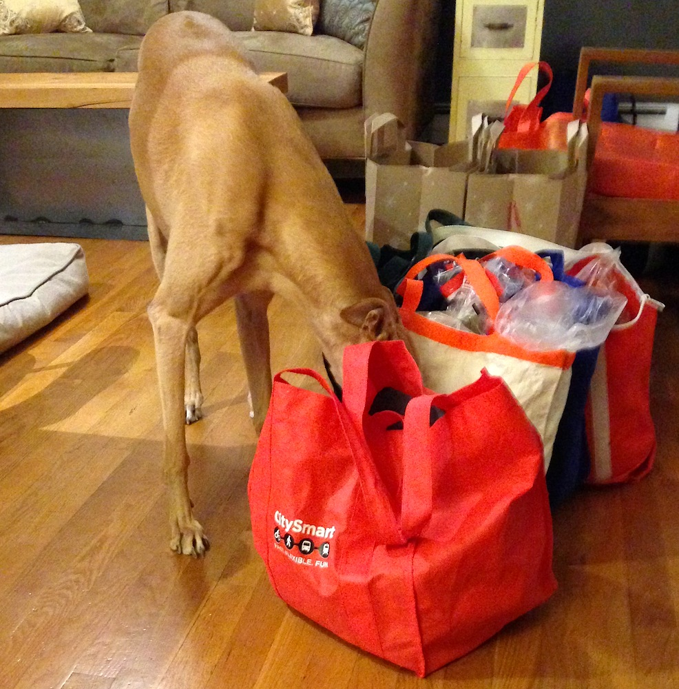 Frugal Hound scopes out our groceries
