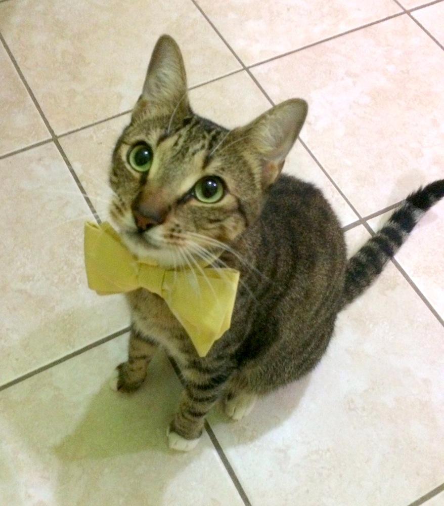 Benny bow tie