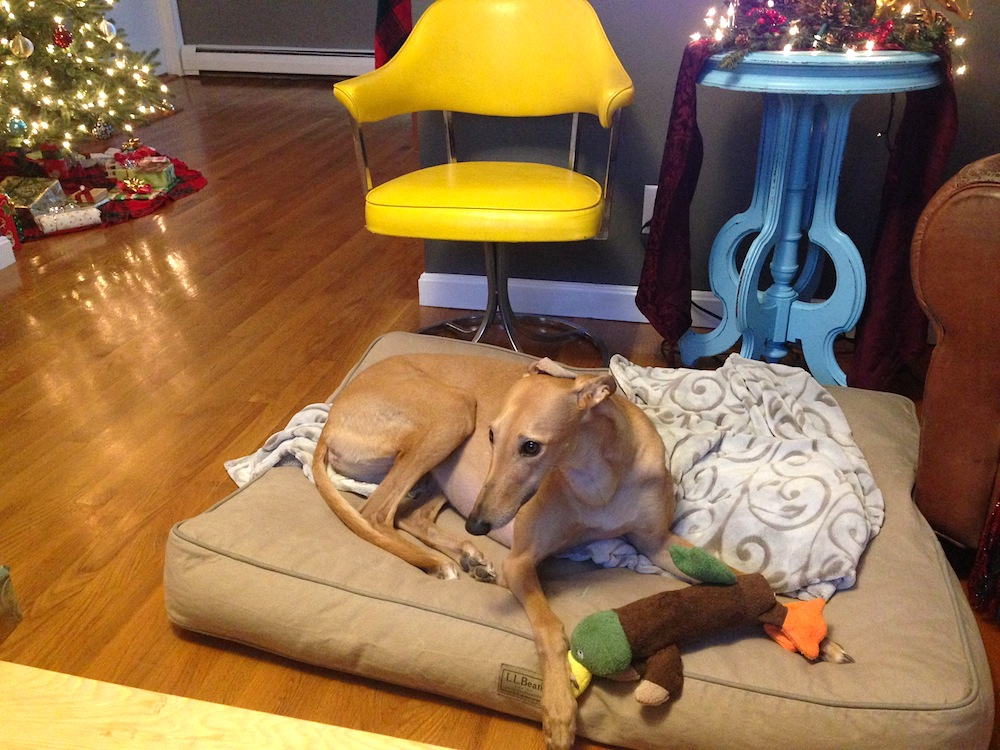 Frugal Hound with last year's Christmas duck