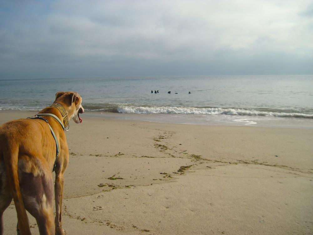 Nauset Light Beach (10)