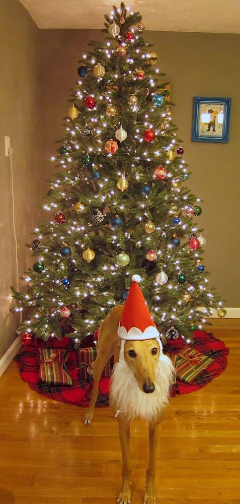 SantaHound_Tree1