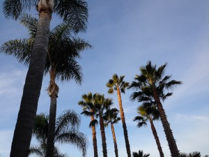 Palm trees in daylight!
