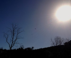Hawks circling in the sun