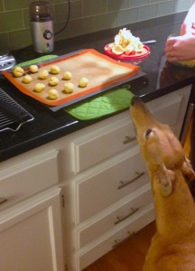 Frugal Hound is the ultimate sous chef