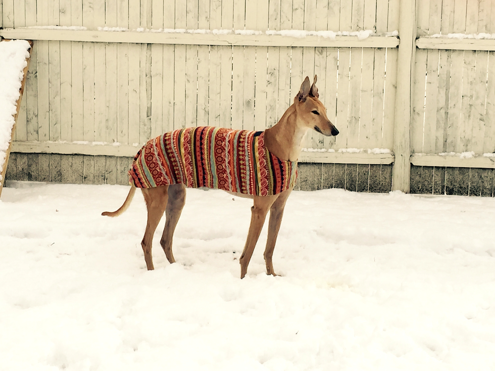 Frugal Hound looking epic in the snow. Our friend took this photo at her house.