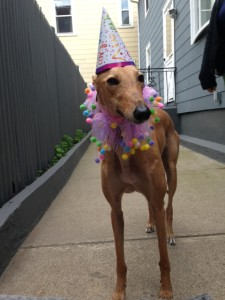 Frugal Hound: loves the birthdays