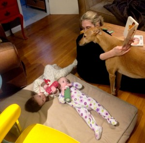 Frugal Hound trying to climb into Cat's lap for story time