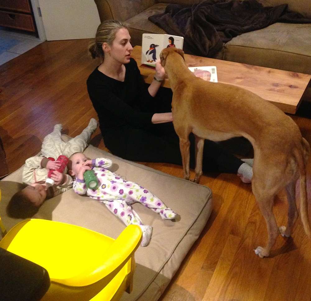 Frugal Hound listening to a story with her new friends, the Budget Blonde family
