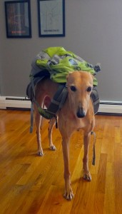 Frugal Hound: ready to trash hunt