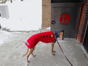 Frugal Hound at the library!
