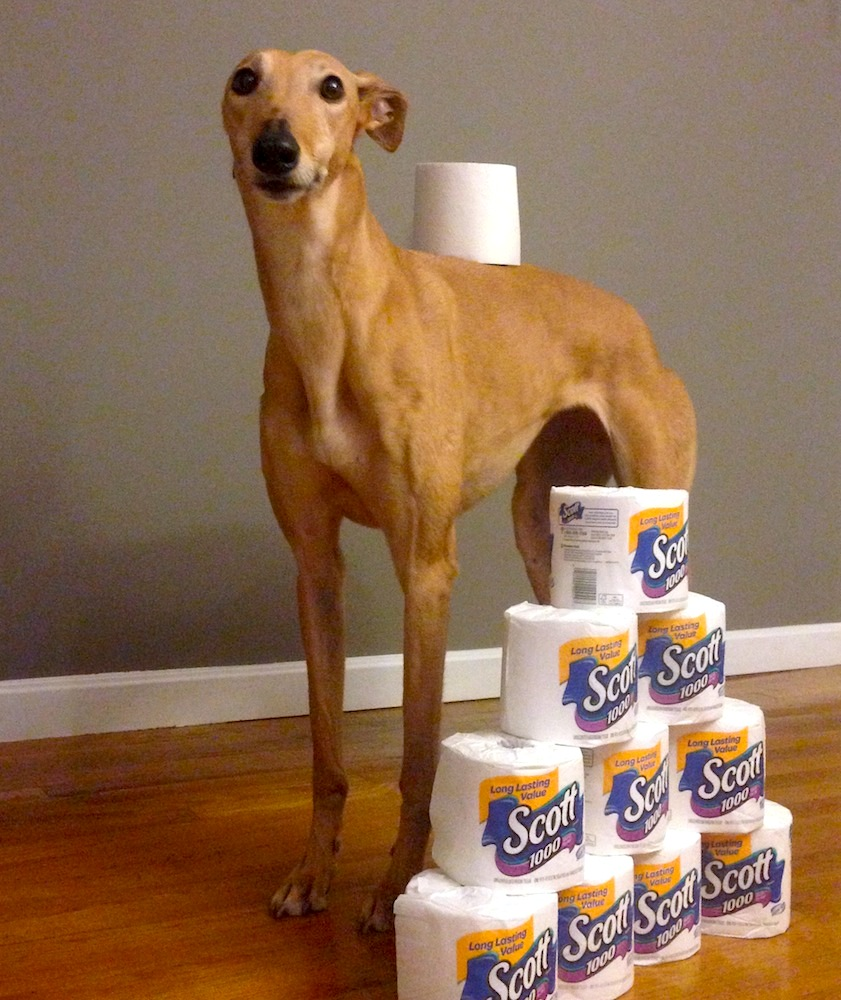 Frugal Hound hearts Costco toilet paper