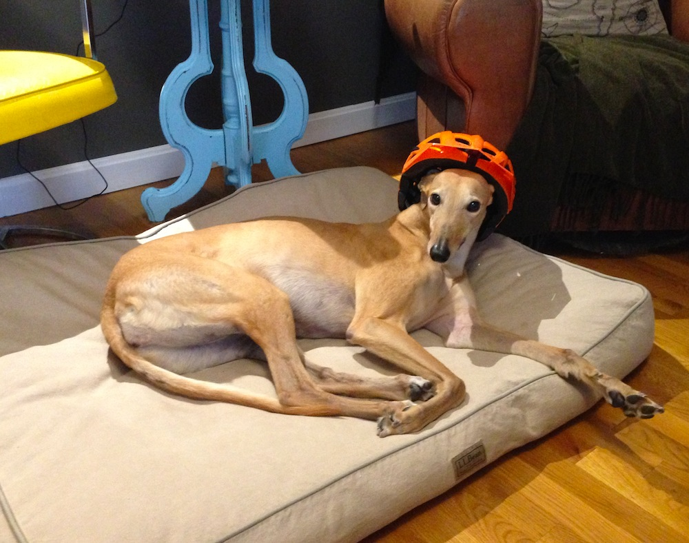 Frugal Hound testing out Mr. FW's new bike helmet. For the record, she does not need a bicycle.