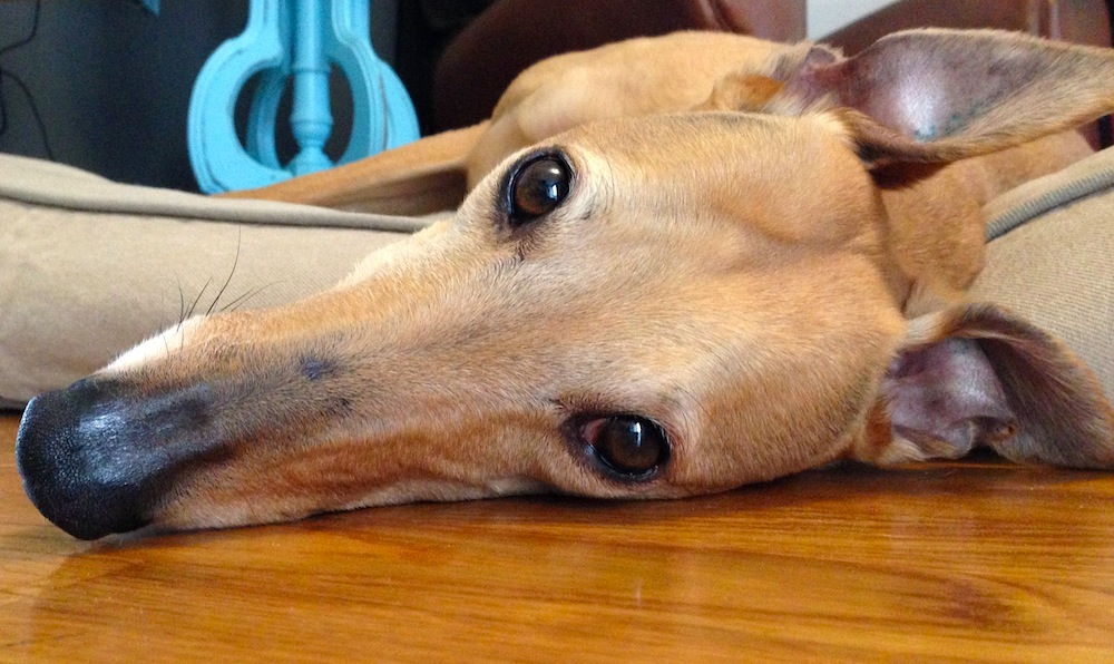 Frugal Hound feels overwhelmed by her finances--probably because she's a dog
