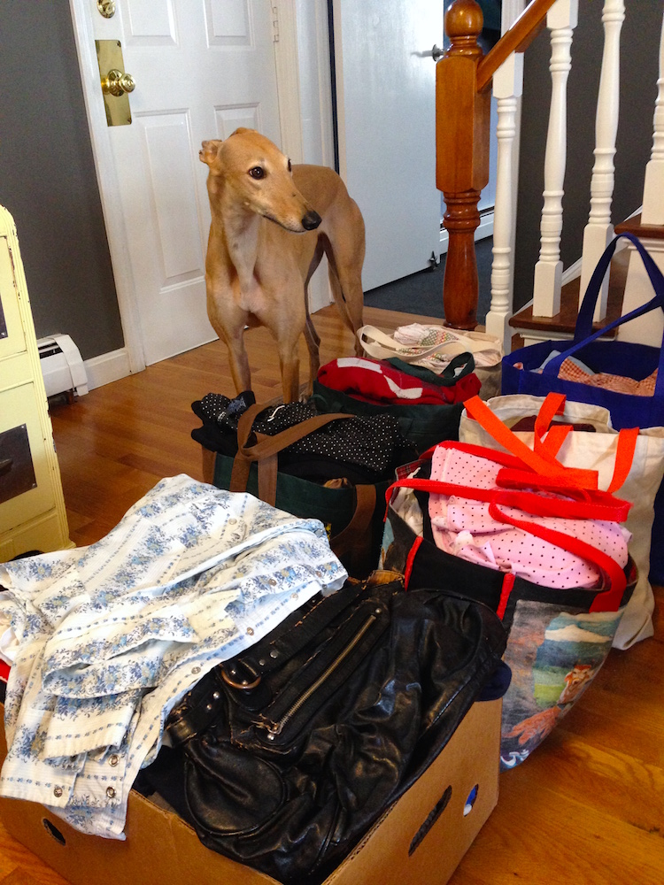 Frugal Hound scoping out the clothes we took to Goodwill last month