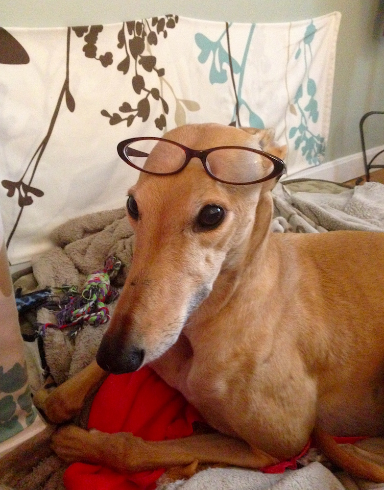 Frugal Hound was super excited to show off my glasses