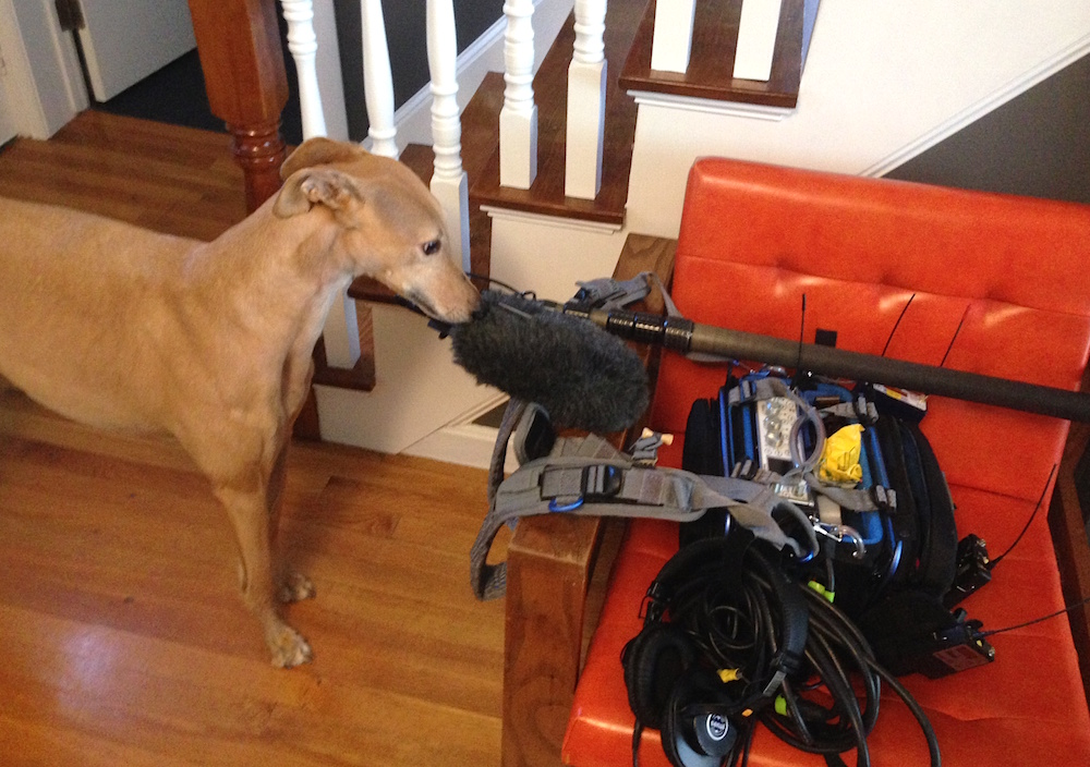 Frugal Hound scopes out the microphone