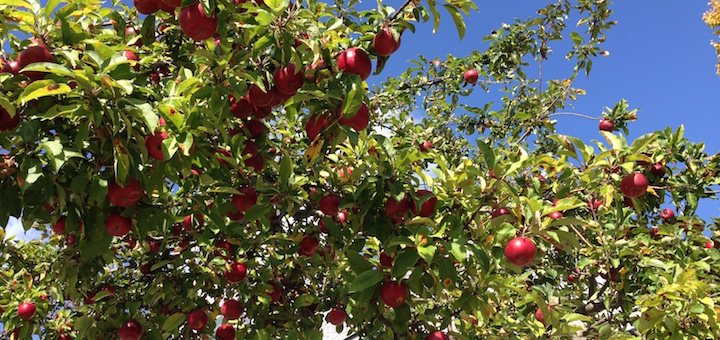 Debt freedom: should taste even better than these apples