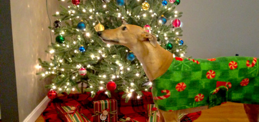 FrugalHound_ChristmasTree_Cover