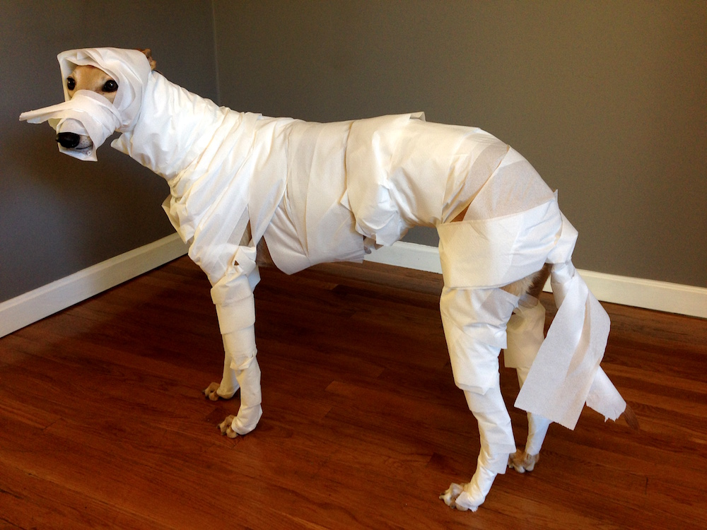 Mummy Hound. Don't worry, she only wore this get-up for about 30 seconds.