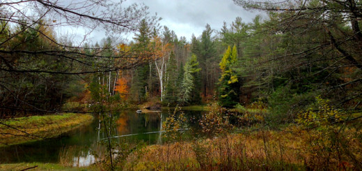 Homestead_Pond_woods_View