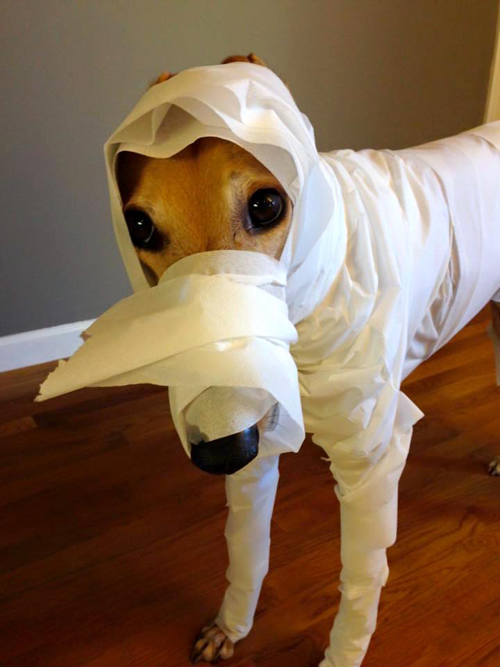 Ok I had to include one more Mummy Hound pic
