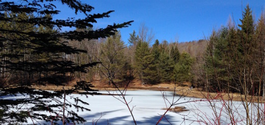 Woods_pond_view_cover